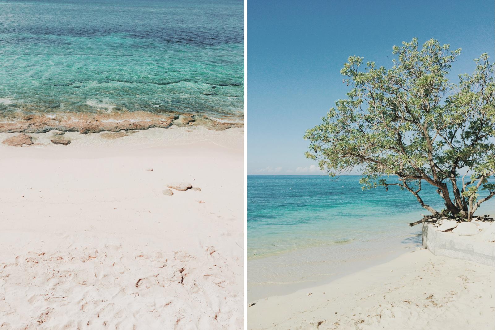 sea-tree